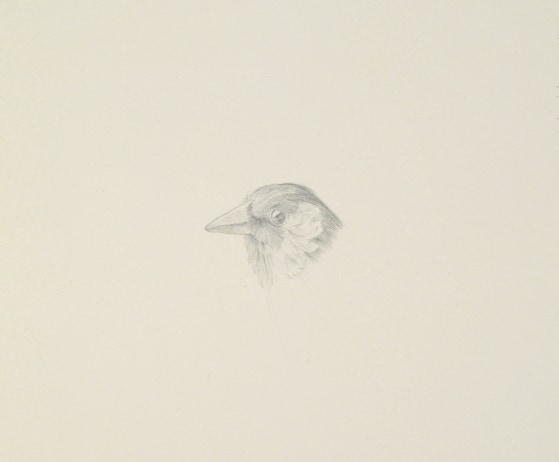 European Goldfinch (Carduelis carduelis), 2015, silverpoint on prepared paper, 6.5 x 7 inches (sheet size)